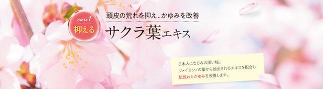 サクラ葉エキス.jpg